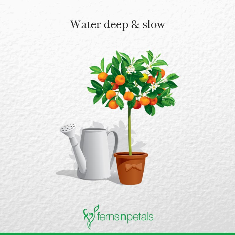 Water Deeply & Slowly