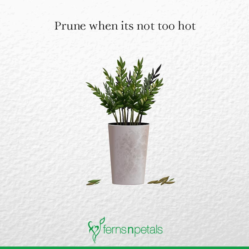 Prune When it's Not too Hot