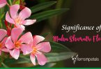 Know the Significance of Beautiful Flowers used in Shiv Pooja