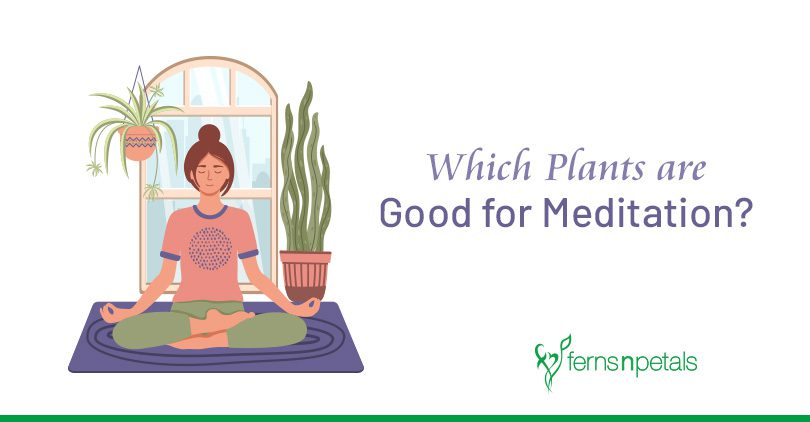 Top 7 Plants that can Help you Meditate Better