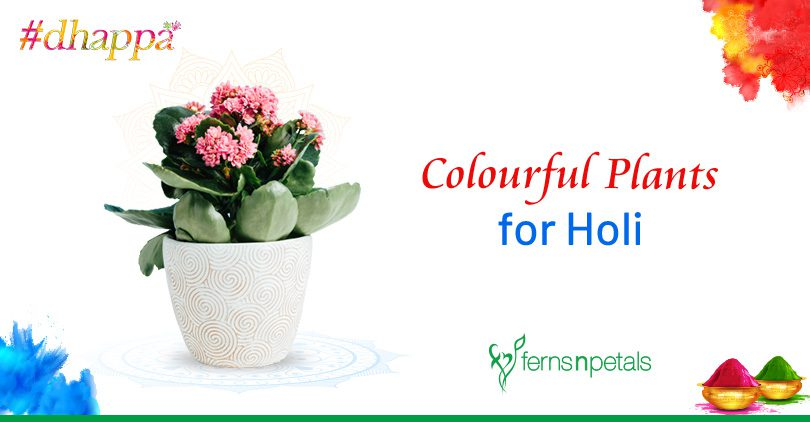 Colourful Plants that You can Gift on Holi