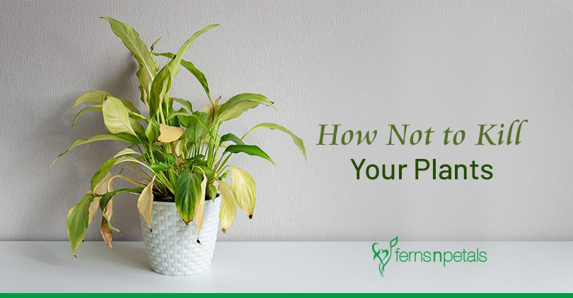 How Not to Kill your Plants?