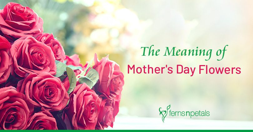 Meaning Behind Popular Mother's Day Flowers