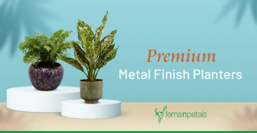 Premium Metal Finish Planters