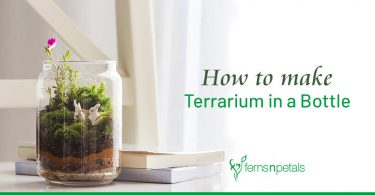 How to Make Terrarium in A Bottle