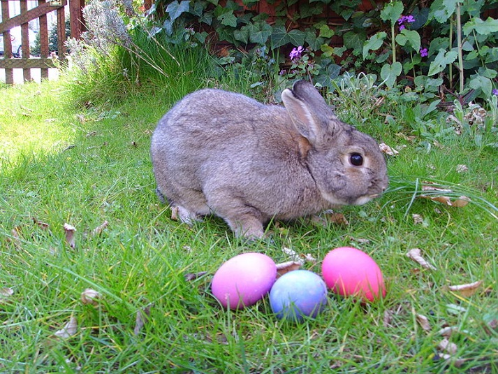 Legend of the Easter Bunny