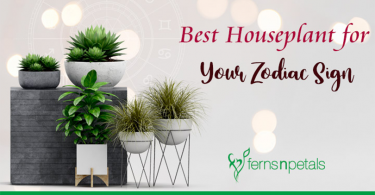 Best Houseplant for Your Zodiac Sign