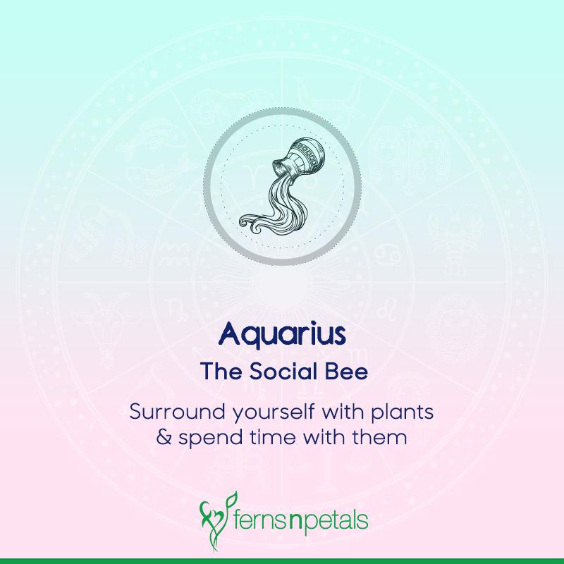 Aquarius - Social Bee