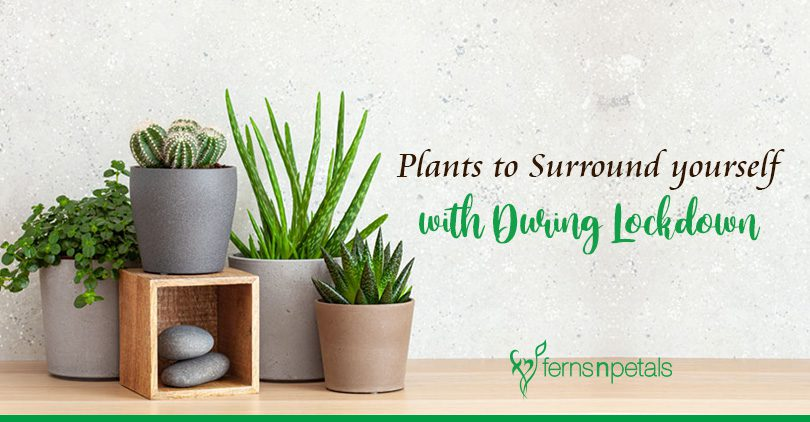 Plants to Surround yourself with During Lockdown