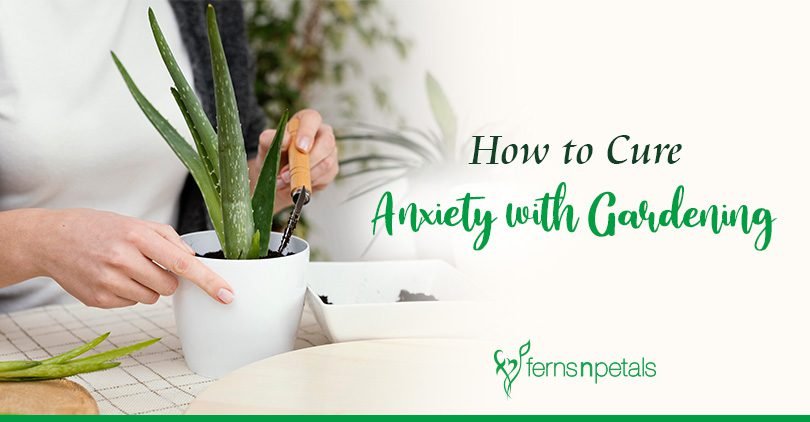 How to Cure Anxiety with Gardening