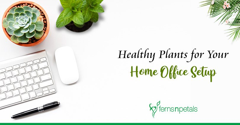 Top 7 Plants that are great for Work from Home
