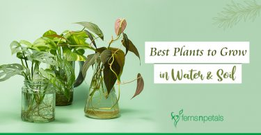 Plants that can grow in soil & water