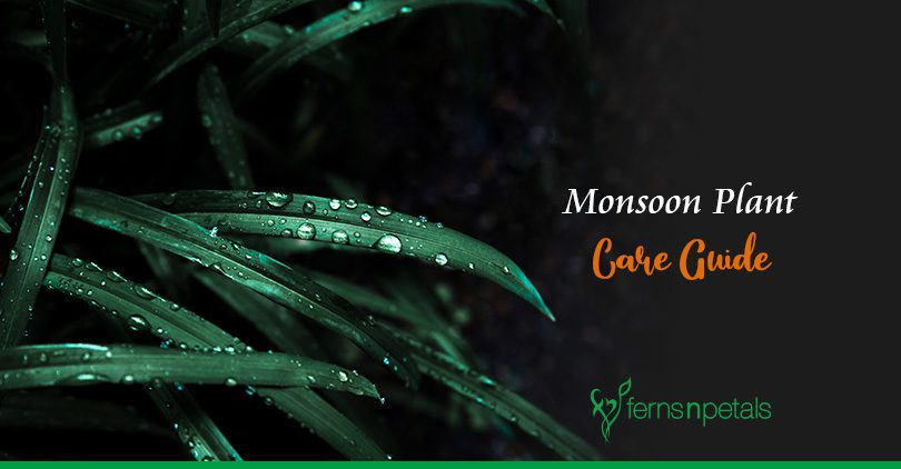 How to Take Care of Plants during the Monsoon