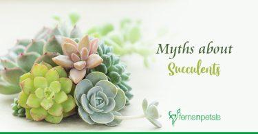 Myths about Succulents