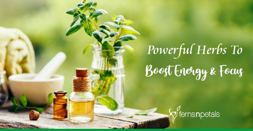 Powerful Herbs To Boost Energy & Focus