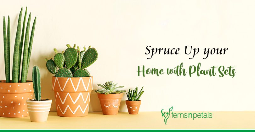 Plant Sets for Sprucing Up your Home Decor!