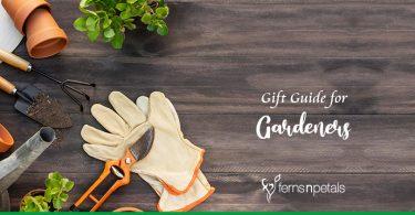 Gift Guide for Gardeners