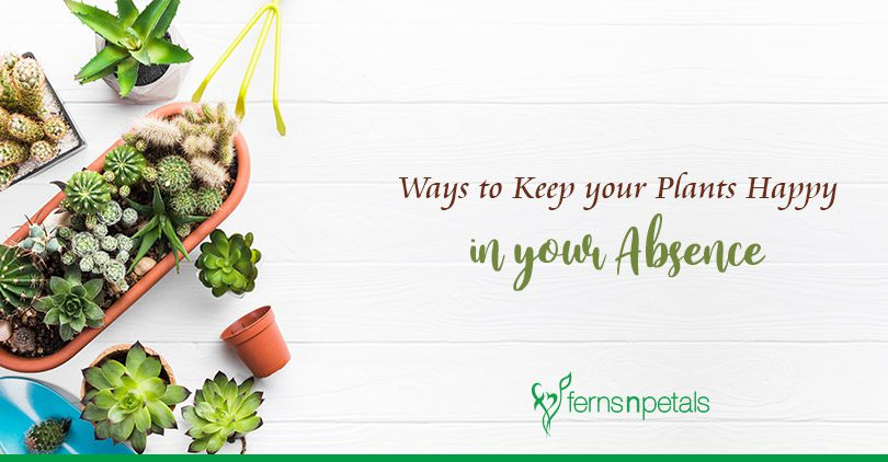 How to Keep your Plants Happy in your Absence?