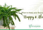 How to Keep your Boston Fern Happy & Alive
