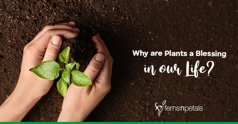 Why are Plants a Blessing in our Life?