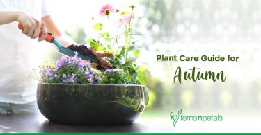 Plant Care Guide for Autumn